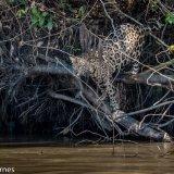 Pantanal 2016 - Andy Barnes-8