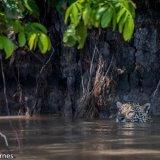 Pantanal 2016 - Andy Barnes-9