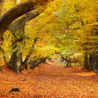 Autumn Panoramic