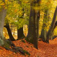 Autumn Woodland - Lady's Walk