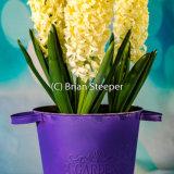 Hyacinth Bucket 1