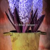 Hyacinth Bucket 3