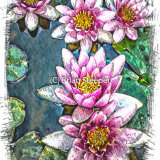 Pond Lily 2