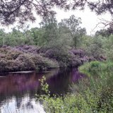 Twigmoor Woods 2