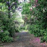 Twigmoor Woods 3
