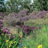 Twigmoor Woods 4