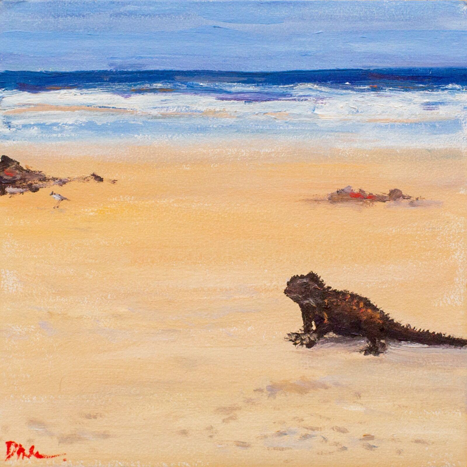 Iguana looking at you, Tortuga Bay, Galapagos