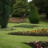 dirleton castle formal garden 1