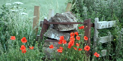 Poppies East Lothian
