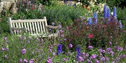 Dirleton garden flowers