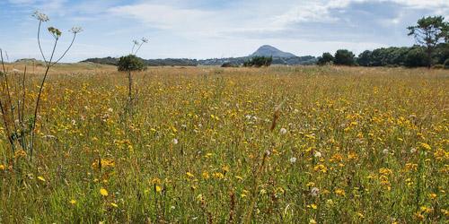 Meadow grassland