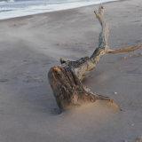 windy winter beach