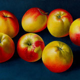 Apples. a Conversation with Cezanne