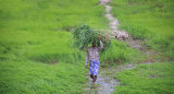 Shwedagon IMG 2968