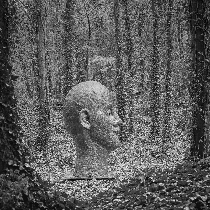 Head in the forest