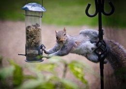 squirrel stealing