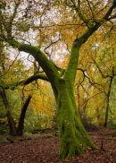 Moss tree in autumn
