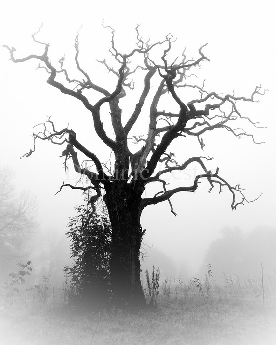 dead tree in the mist
