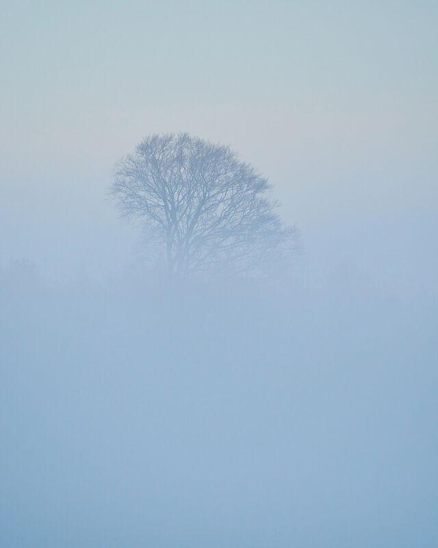 Misty tree