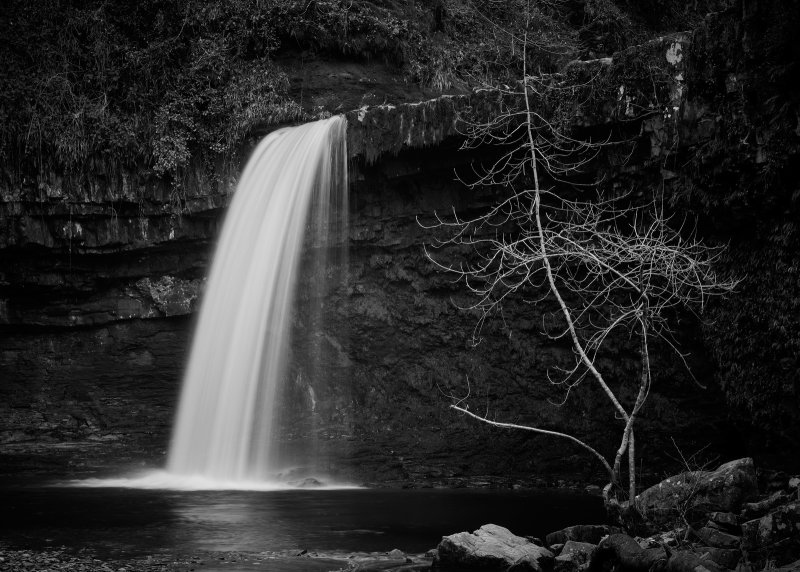 Lady falls with tree