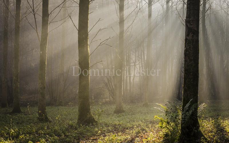 Mist shadows