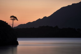Lone tree after sunset