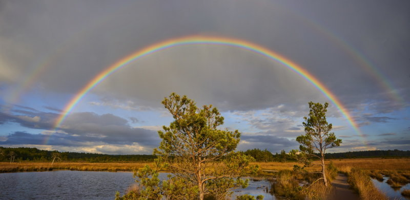 Thursley Rainbow