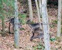 Young deer at Dunkeld, Perthshire