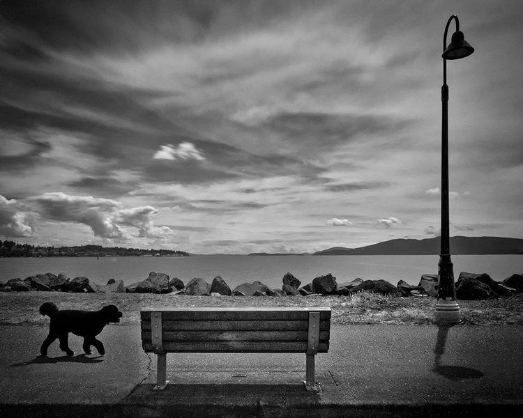 Lonesome Dog