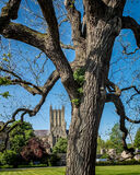 Cathedral and Tree