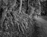 Padden Walk