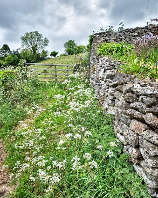Spring in Somerset BW