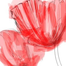 Big red poppies