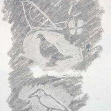 Birds on Rome station
