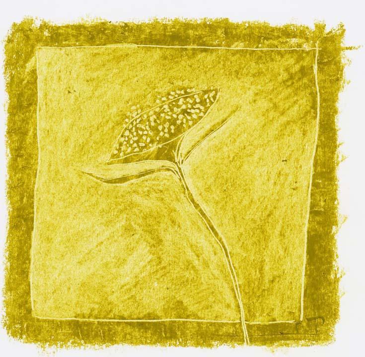 Tuscan plant 2