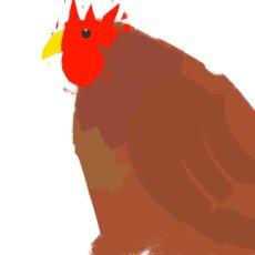 Chicken at the back door