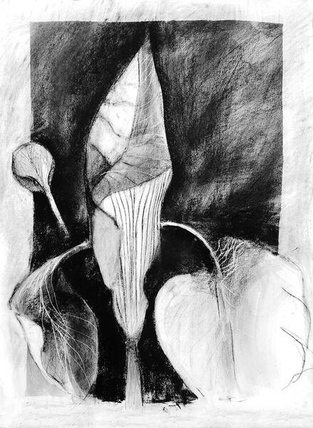 Large iris 2