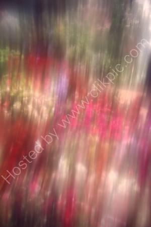 Flowerscape 09-D-12