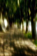 Tree-lined promenade