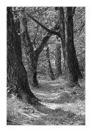 Woodland path by Lake Gormire