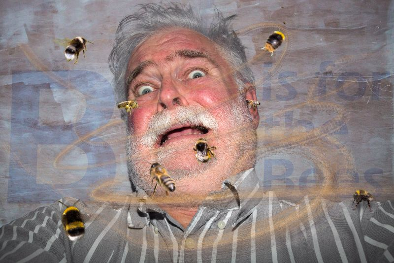 12 - Bees - AB