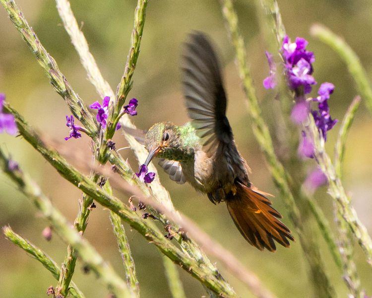 Busy humming bird