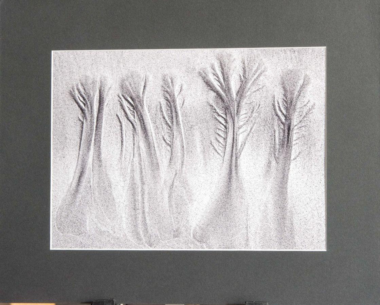 G2 MON 20 Beach Trees