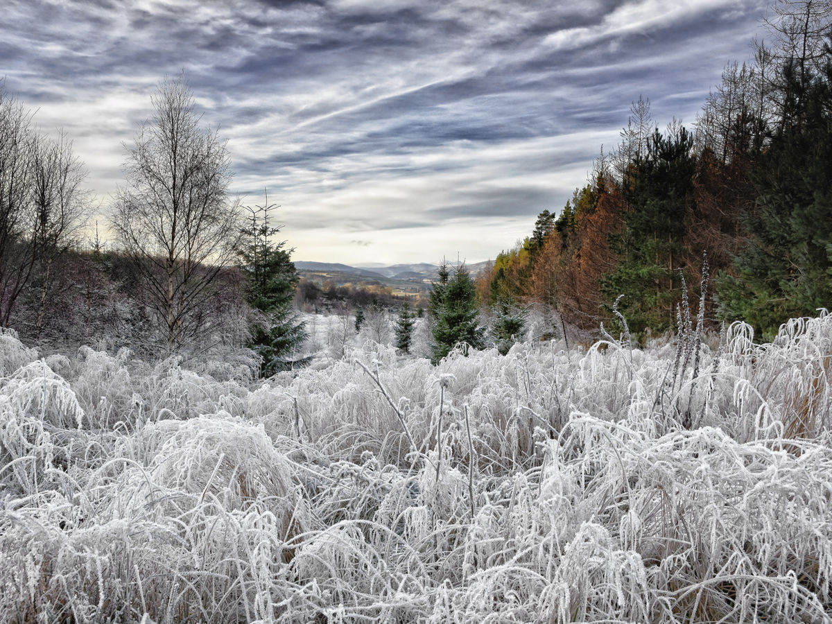 G2 PDI 2 Frozen Howe