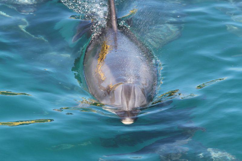Novice colour 3rd Dolphin - BH