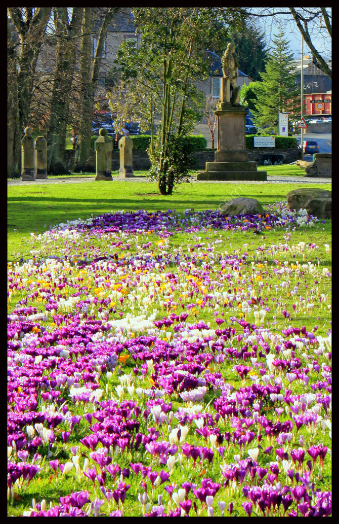 South Inch Perth in Bloom