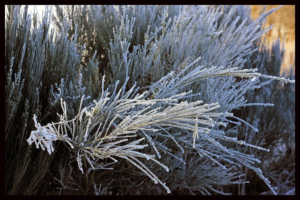 Freezing plant