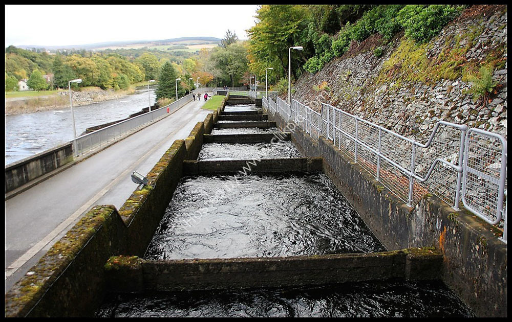 The Fish Ladder at Pitlochry Dam