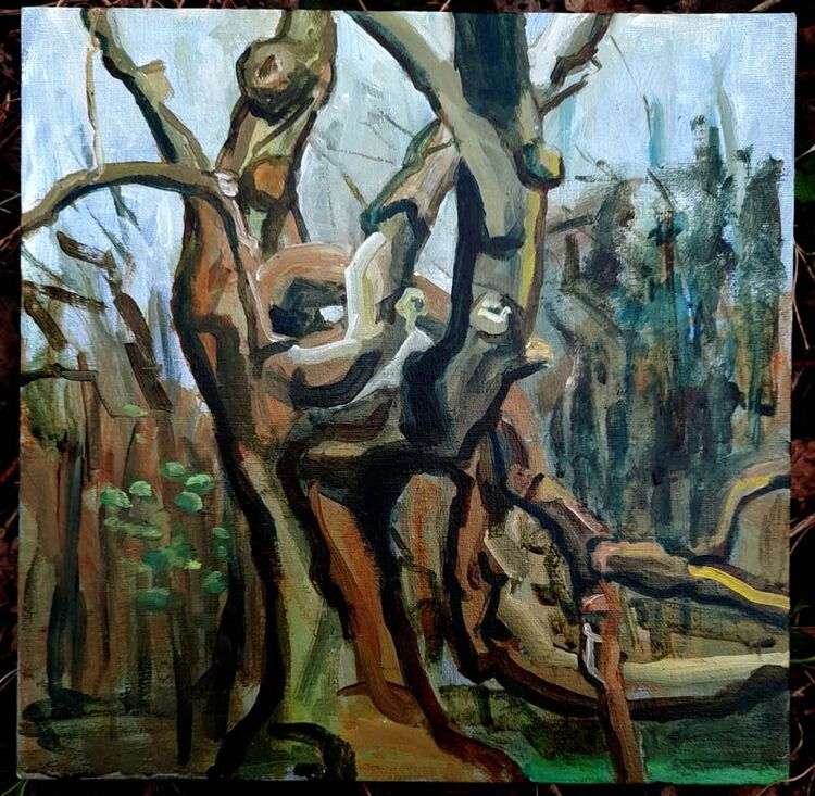 Hilary Cartmel oak tree