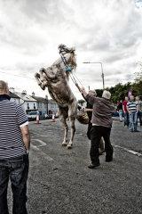 The Horse Seller Ballinasloe